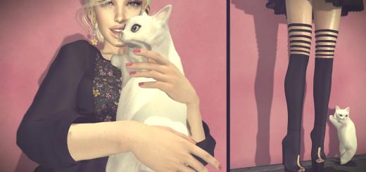 She provides cat cuddling service