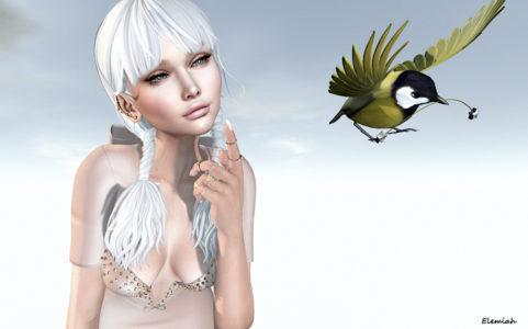 A little bird told me... (blog)