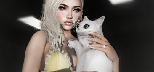 Miaou (blog)
