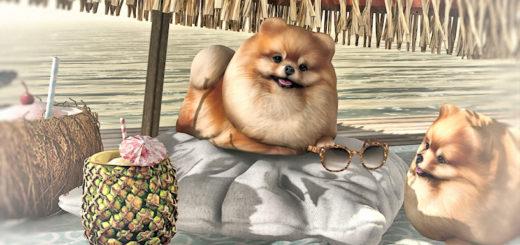 Dog's paradise (blog)