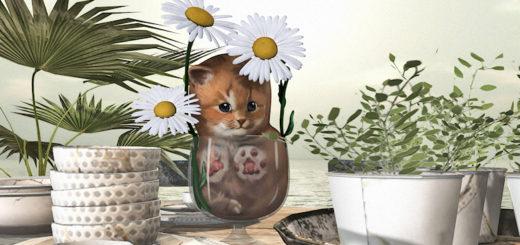 Kitten in my glass (blog)