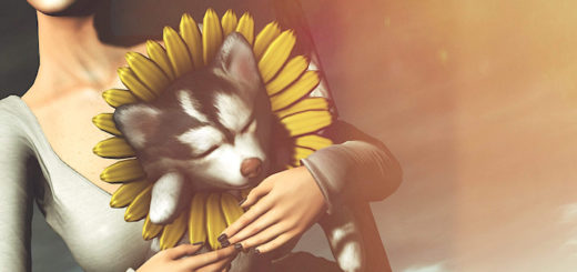 Sleeping Husky (Blog)
