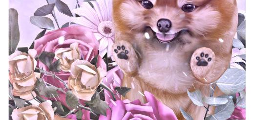 Happy Standing Pomeranian (blog)
